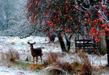 Những địa điểm du lịch đẹp ở Canada mùa đông