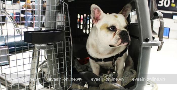 Những loài động vật Eva Air hạn chế vận chuyển trên chuyến bay